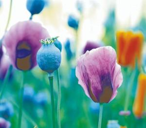 flowers(cmy)