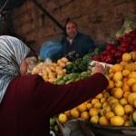 الوقود الحيوي وأزمة الغذاء العالمية