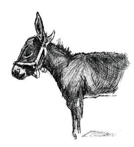 donkey_0001_NEW2012_11_13_06_14_16