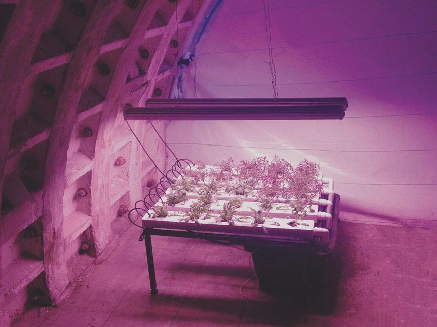 الزراعة تحت الأرض
