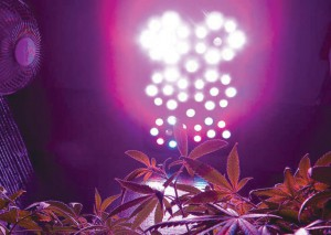 x5-led-grow-light