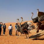 محمية الحياة البرية في الشيبة