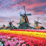 أمام زهور التوليب