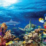ماذا لو أصبحت مياه البحار حلوة؟